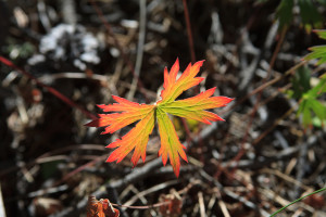 Look for interesting leaves and other iconic fall details