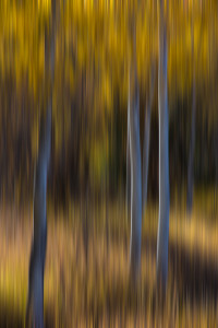 Use a slow shutter speed and move the camera to create abstract images